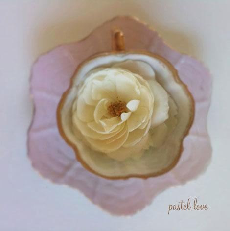 Teacup-rose